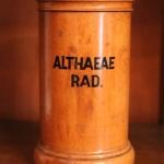 Althaeae rad.
