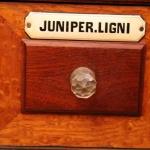 Juniper. ligni